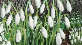 Snowdrop Patch at Kew