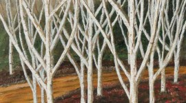 The Silver Birches