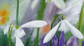 Snowdrops in the Border